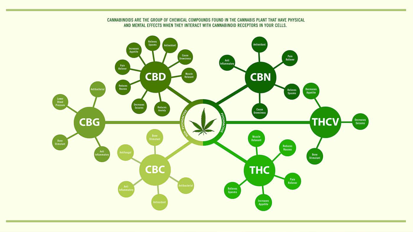 cannabinoids-in-the-body