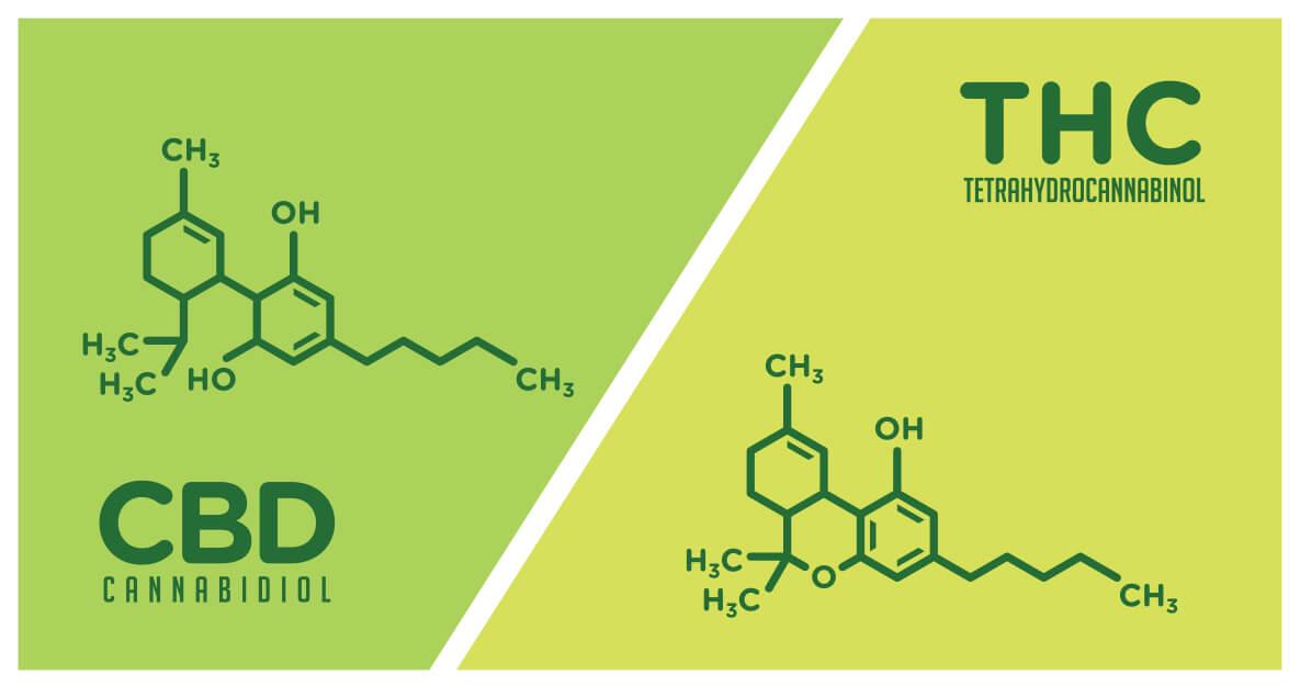 CBD vs THC cannabinoids