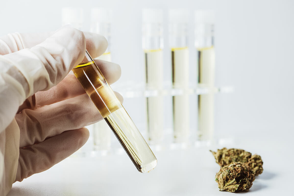 How to Read a CBD Flower Lab Report
