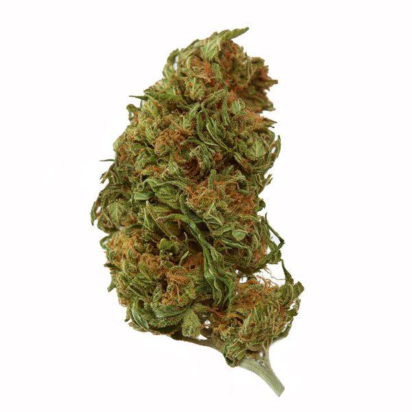 acdc cbd flower strain