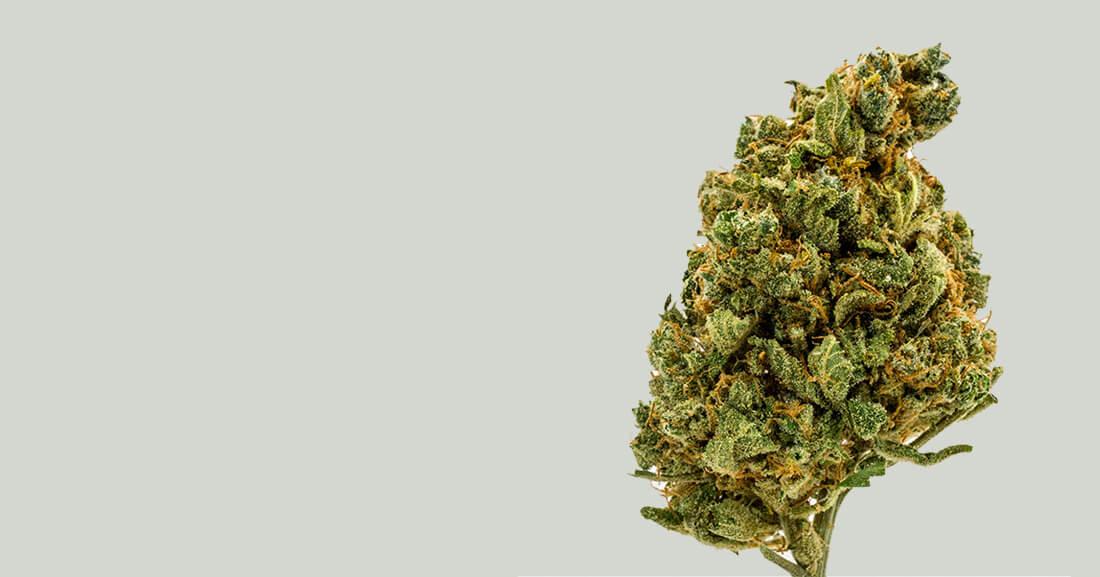 premium cbd hemp flower category