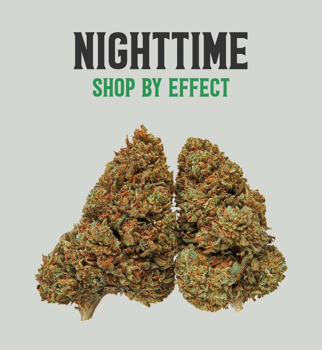 Nighttime Cat