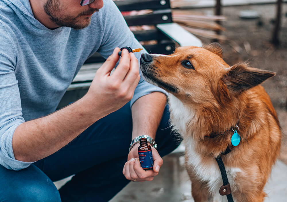 Side effects CBD for pets