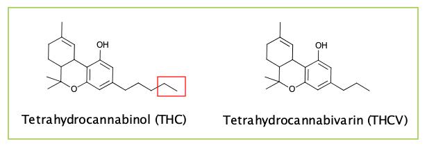 THCV vs THC